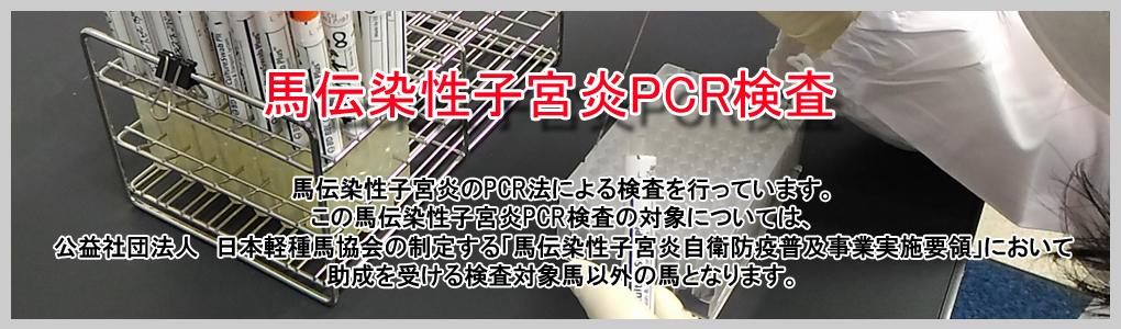 馬伝染性子宮炎PCR検査